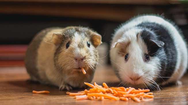 hewan makan