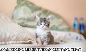 Anak Kucing Membutuhkan Gizi yang Tepat