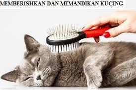 Bersihkan dan Mandikan Kucing