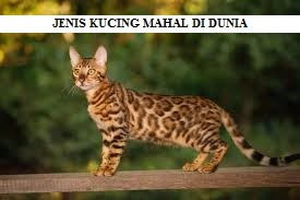 JENIS KUCING MAHAL