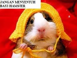 Jangan Menyentuh Bayi Hamster
